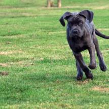 puppy2 kopie